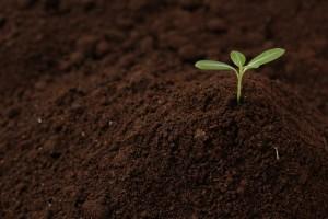 目標達成の願望を育む方法